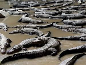 Colorado Gators Reptile Park near Alamosa