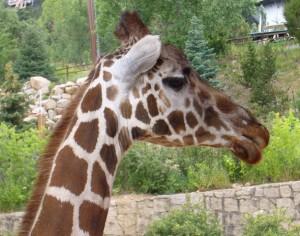 Cheyenne Mountain Zoo near Colorado Springs