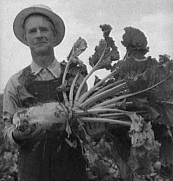 Greeley sugar beet grower