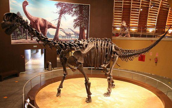 Camarasaurus skeleton