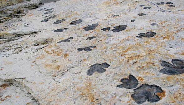 Dinosaur Ridge dinosaur tracks in Colorado
