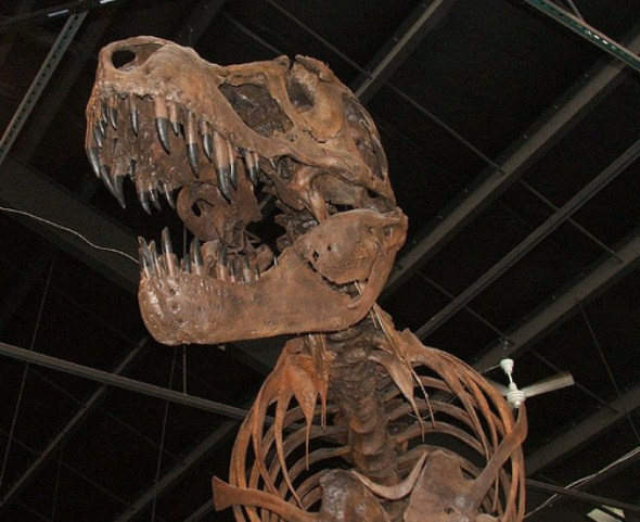Rocky Mountain Dinosaur Resource Center
