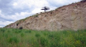 Triceratops Trail in Golden Colorado