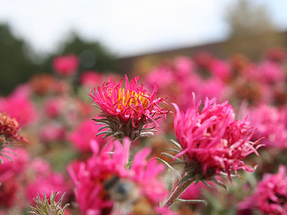 Colorful blooms are an exciting part of the Aurora Water Xeriscape Demonstration Garden. / Photo from Aurora Water