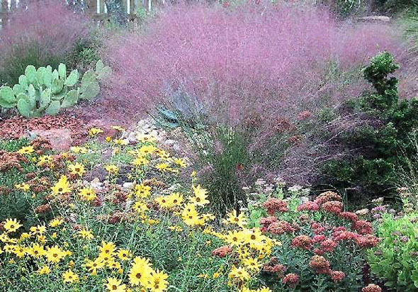 Color and variety mark the Denver Water Utility's xeriscape garden. / Photo from Denver Water Utility